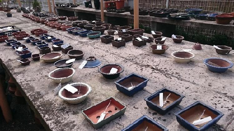 こだま館盆栽鉢