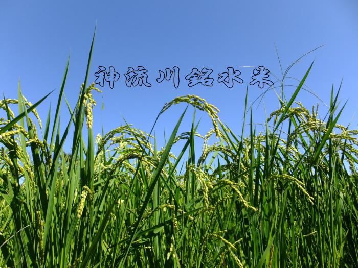 商標ブランド:神流川銘水米