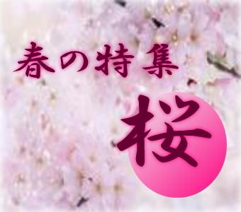 サクラ盆栽特集!